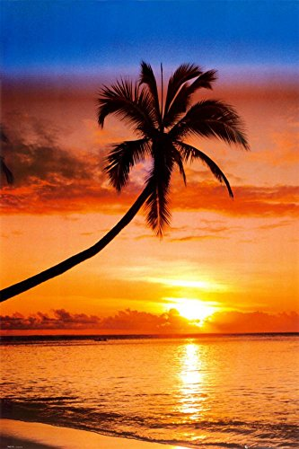 Sunset Palm Poster 24 x 36in