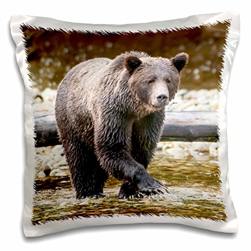 3dRose pc_189073_1 Grizzly Bear Fishing for Salmon in Great Bear Rainforest, Canada-Pillow Case, 16 by 16