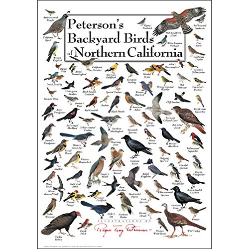 Bird Large Poster - Earth Sky + Water Poster - Peterson's Backyard Birds of Northern California
