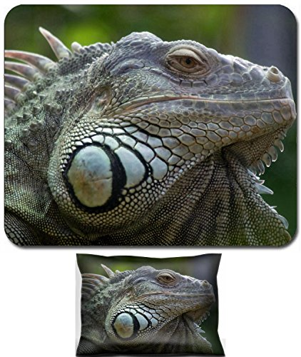 Luxlady Mouse Wrist Rest and Small Mousepad Set, 2pc Wrist Support design Iguana in Zurich Zoo Switzerland IMAGE: 5090750 ()