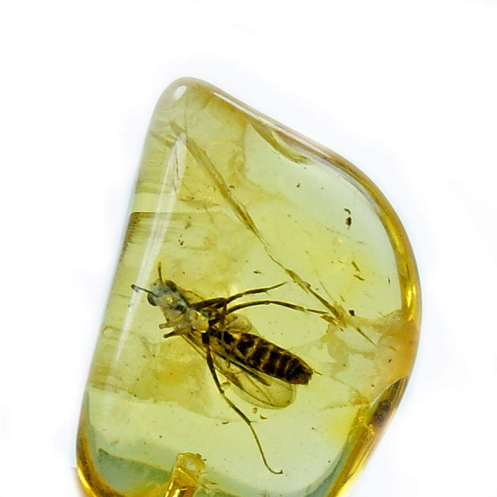 Rare Natural Baltic Amber with Insect Inclusion /& Sterling Silver Pendant