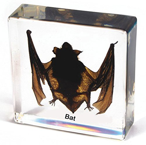 ciiizaoo bat embedded specimen paperweight in Resin In Clear Lucite Block