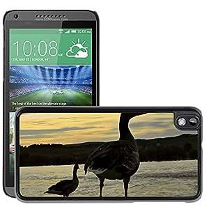 Super Stella Slim PC Hard Case Cover Skin Armor Shell Protection // M00146437 Duck Bird Abendstimmung Sunset Sky // HTC Desire 816