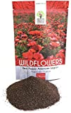 Red Poppy Seeds - Bulk 1/4 Pound Bag - Over 800,000 Wildflower Seeds - 100% Pure Live Seeds!