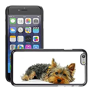 """Super Stella Slim PC Hard Case Cover Skin Armor Shell Protection // M00144530 Yorkshire Terrier York Dog Pet // Apple iPhone 6 4.7"""""""