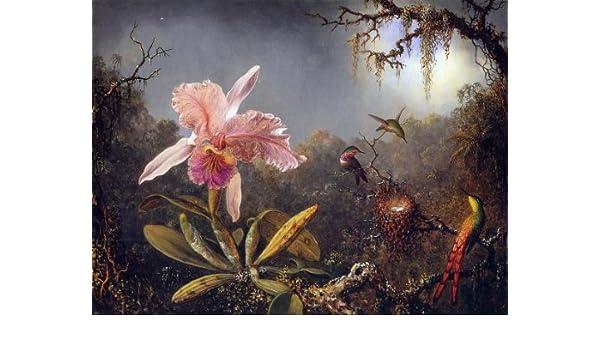 Cattleya Orchid 3 Brazilian Hummingbirds Heade 100/% Cotton Canvas Picture Print