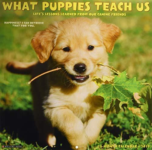 - What Puppies Teach Us 2019 Wall Calendar
