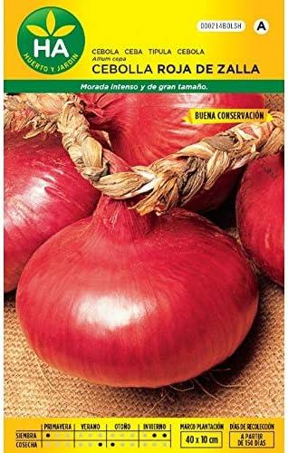 Semillas Batlle - Semillas cebolla roja de zalla: Amazon.es: Jardín
