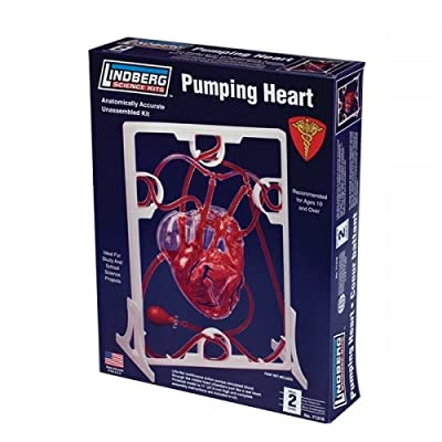 Lindberg Pumping Heart: Toys & Games