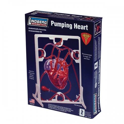 Lindberg Pumping Heart