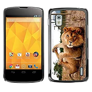 Exotic-Star Snap On Hard Protective Case For LG Google NEXUS 4 / Mako / E960 ( Cute Funny Lion Playing )