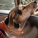 QALO Customized Silicone Dog ID Tag - Blush Floral