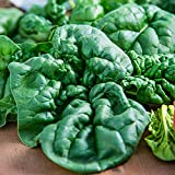 Spinach, Bloomsdale Long Standing Spinach Seeds, 500+ Premium Heirloom Seeds, Rich & Delicious!,Fantastic Addition…