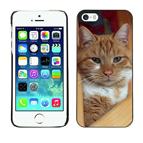 Premio Sottile Slim Cassa Custodia Case Cover Shell // F00014830 chat // Apple iPhone 5 5S 5G