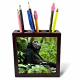 3dRose Danita Delimont - Primates - Africa, Uganda, Kibale NP. A relaxed male chimp looks to the trees. - 5 inch tile pen holder (ph_276643_1)