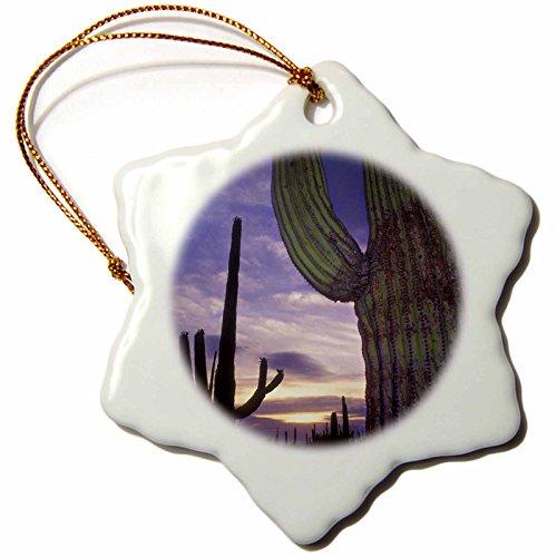 3dRose orn_87811_1 Saguaro Cacti, Saguaro NP, Arizona US03 CBE0000 Christopher Bettencourt Snowflake Porcelain Ornament, 3-Inch by 3dRose