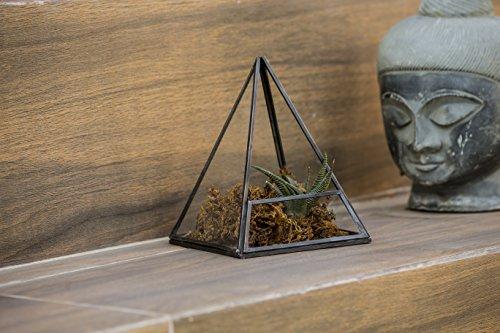 Urban Born Glass Terrarium, Pyramid