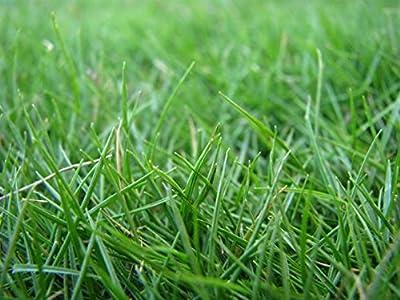 Hulled Coated Bermuda Grass 5 Lb