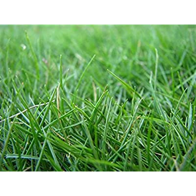 HULLED COATED BERMUDA GRASS 5 LB : Garden & Outdoor