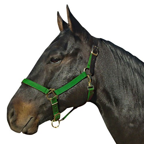 Leather Crown Safety Halter (Intrepid International Breakaway Leather Crown Nylon Safety Halter, Green, Cob)