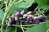 Mucuna Pruriens Velvet Bean Cowitch Raw Black Bengal Florida Velvet Bean Mauritius Velvet Bean Yokohama 100 Seeds