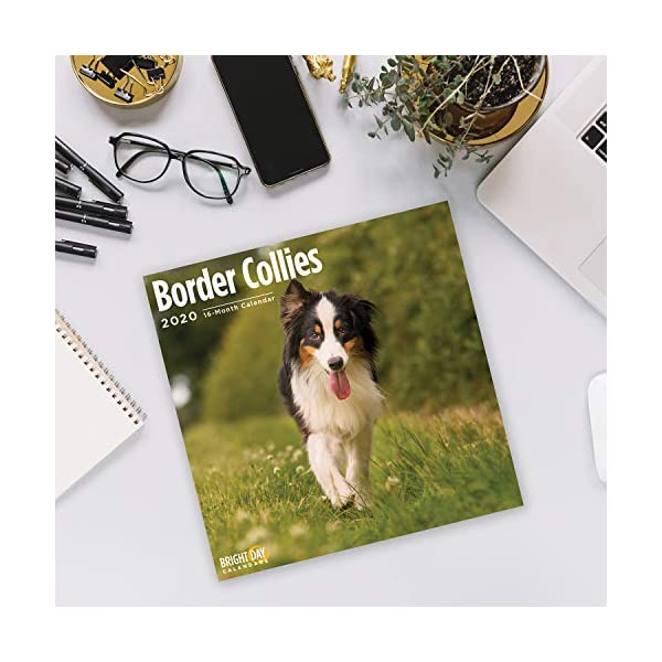 2020 Border Collies Wall Calendar by Bright Day, 16 Month 12 x 12 Inch, Cute Dogs Puppy Animals Colley 5