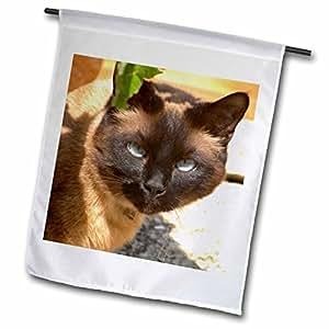 Danita Delimont - Cats - Cat, Le Brusc, Six Fours, Cote dAzur, Var, France - EU09 PKA1351 - Per Karlsson - 12 x 18 inch Garden Flag (fl_81597_1)