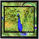 Susan Brown Designs Preening Peacock Ceramic Tile Coaster, Set of 4