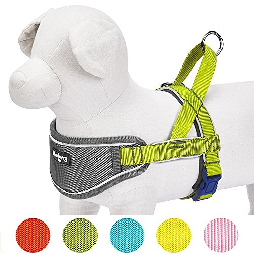 Blueberry Pet New 5 Colors Soft & Comfy 3M Reflective Strips Padded Dog Harness Vest, Chest Girth 20.5'' - 26'', Citrus Lime, Medium, Nylon Adjustable Training Harnesses for Dogs by Blueberry Pet
