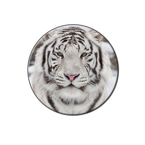 Graphics and More White Bengal Tiger with Blue Eyes - Metal Tie Tack Hat Lapel Pin (Tiger Butterfly Brooch)