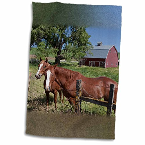 3dRose Danita Delimont - Horses - Near Pullman, Washington, in Palouse Country. Horses and Red Barn. - 12x18 Towel (twl_206018_1)