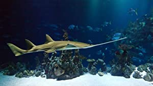Animal Shark Sawfish Ocean Carpenter Shark,Puzzles for Adults,Wooden Jigsaw Puzzles,Puzzle Toys for Adults Kids-1000_Tablets