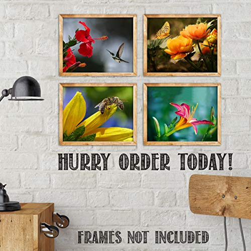 The Birds, Bees, Butterflies & Blooming Blossoms Wall Art Set- Vivid Typographic