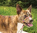 PetSafe Gentle Leader Chic Head Collar, Small, Donuts