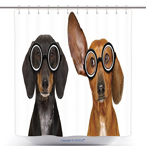 Waterproof Shower Curtains Couple Of Dumb Silly Dachshund Sausage Dog Wearing Funny Nerd Glasses Isolated On White 591646313 Polyester Bathroom Shower Curtain Set With Hooks