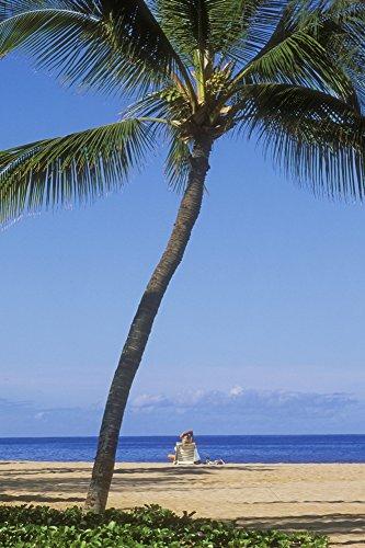 - Posterazzi Hawaii Lanai Manele Bay Park Palm Tree and Woman On The Beach. Poster Print (11 x 17)