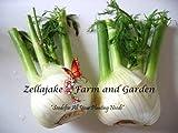 Florence Fennel 1/4LB seeds Vegetable Spice Heirloom Herb USA Bulk #198