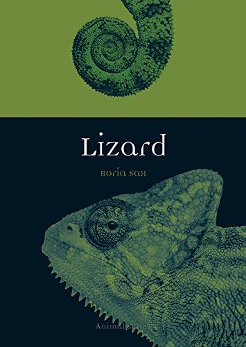 Lizard (Animal) (Lizard Animals)