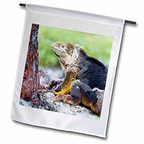 3dRose Danita Delimont - Reptiles - Ecuador, Galapagos Islands, Plaza Sur, Male land iguana. - 18 x 27 inch Garden Flag - Plaza Americas