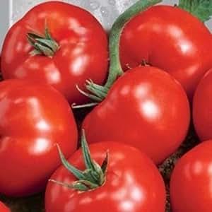 Semillas de Tomate Sanka. Hortalizas Semillas de Ucrania
