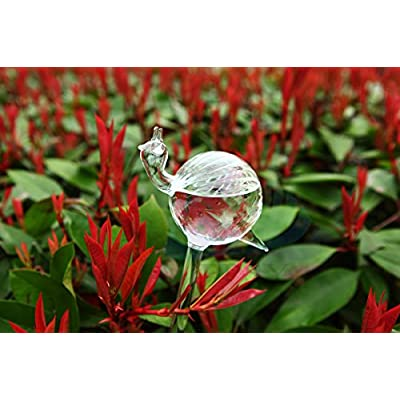 Set of 4 Small Hand Blown Clear Glass Self Watering Aqua Globes in Different Shapes of Mushroom, Bird, Snail and Watering Can : Self Watering Planters : Garden & Outdoor