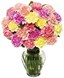 Benchmark Bouquets 25 Stem Pastel Carnations, With Vase