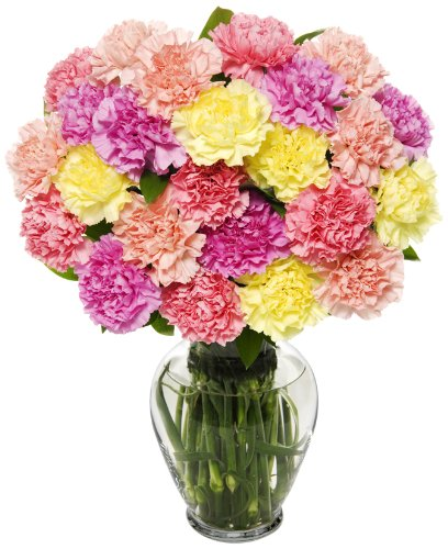 25 Stem Pastel Carnation Bunch