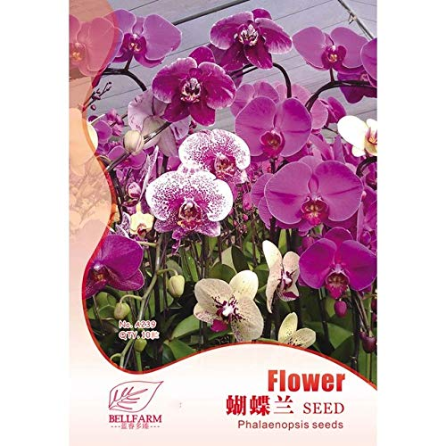 Phalaenopsis Purple Pink Butterfly Orchid Bonsai, 10pcs 'Seed Original Pack, Light Fragrant Home Garden Flowers