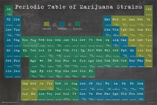 Periodic Table of Marijuana Strains 36x24 Graphic Art Print