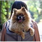 Luxury Lambo Pet Carrier Backpack – Airline Approved – All-In-One Pet Carrier and Pet Kennel for Cats and Small Dogs by Pet Magasin