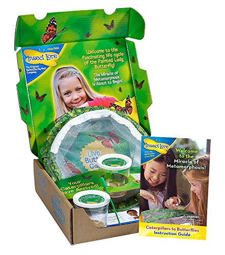 insect-lore-live-butterfly-growing-kit-toy-10-caterpillars-to-butterflies-ship-now