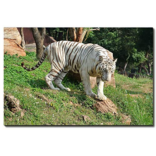 YQ Park Modern Zoo Forest Animal White Tiger Canvas Wall Art 1 PCE Painting Artwork Picture 24x36 inch No Framed for Living Room Home ()