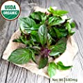 Gaea's Blessing Seeds - Thai Basil Seeds 400+ Organic Seeds Non-GMO Open-Pollinated High Yield Heirloom