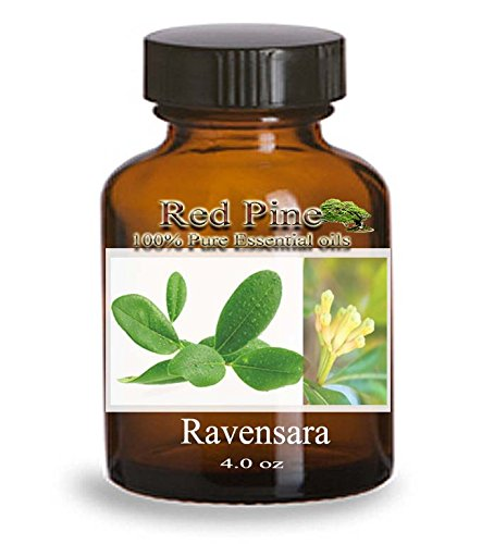 Ravensara Essential Oil - Ravensara aromatica - 100% Pure Therapeutic Grade - Essential Oil from Flora Power by Red Pine, Inc. (004 mL - Dram Bottle)